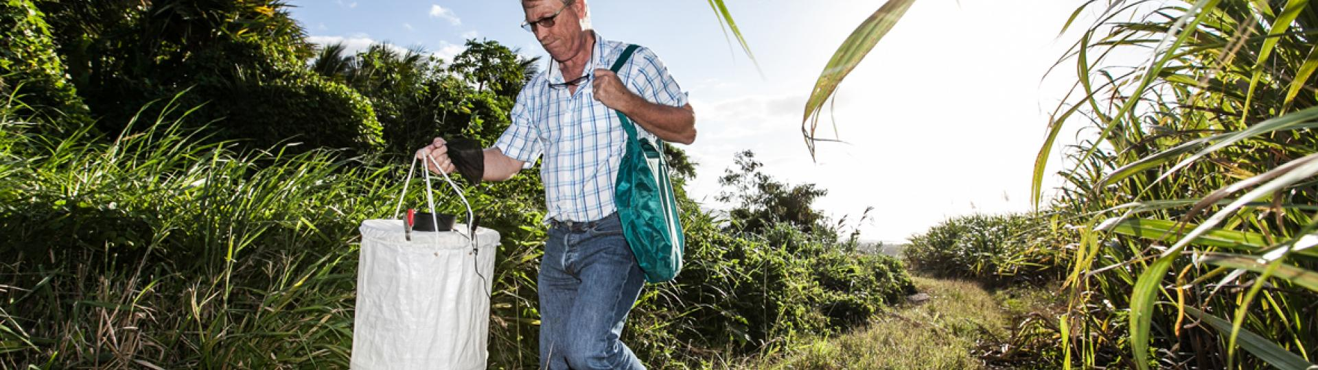 Setting up mosquitoe traps in Reunion Island