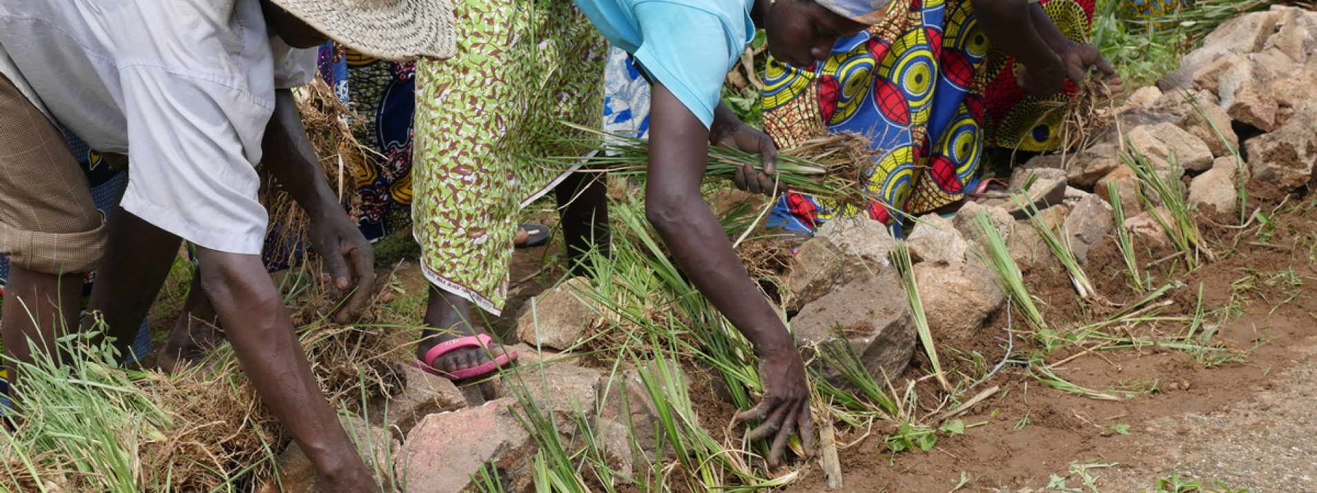 Agroecology in Togo.