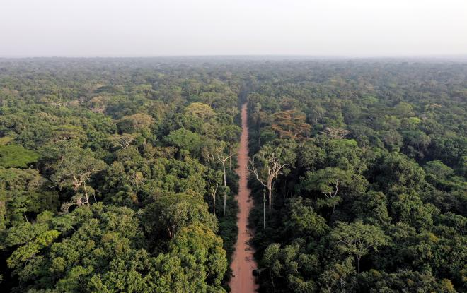A road crosses a forest in northern Congo