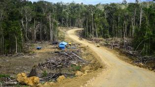 Road-related deforestation in West Papua