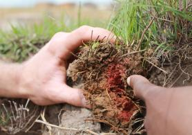 Soil study in South Africa.